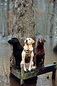 DOG 18 DB0019 01
