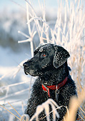 DOG 18 DB0032 01