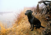 DOG 18 DB0085 01