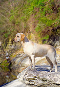 DOG 18 DC0008 01