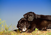 DOG 18 DC0050 01