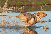 DOG 18 DS0016 01