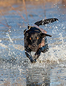 DOG 18 DS0017 01