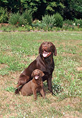 DOG 18 FA0025 01