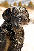DOG 18 IC0012 01