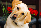 DOG 18 IC0014 01
