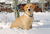 DOG 18 IC0016 01