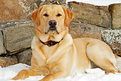 DOG 18 IC0021 01