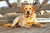 DOG 18 IC0022 01