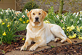 DOG 18 IC0026 01