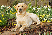 DOG 18 IC0027 01