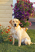 DOG 18 IC0029 01