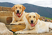 DOG 18 IC0033 01