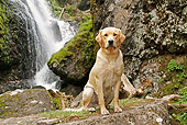 DOG 18 IC0034 01