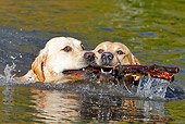 DOG 18 IC0035 01