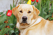 DOG 18 IC0037 01