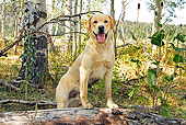 DOG 18 IC0043 01
