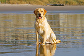 DOG 18 IC0045 01