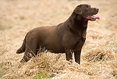 DOG 18 JE0005 01