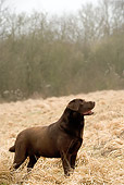 DOG 18 JE0006 01