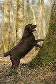 DOG 18 JE0008 01