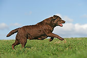 DOG 18 JE0009 01
