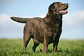 DOG 18 JE0010 01