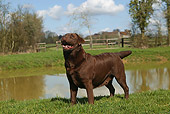 DOG 18 JE0014 01
