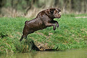 DOG 18 JE0015 01