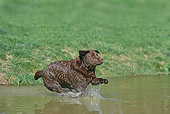 DOG 18 JE0016 01