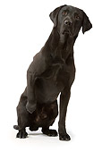 DOG 18 JE0020 01