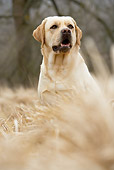 DOG 18 JE0028 01