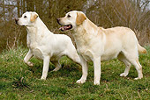 DOG 18 JE0034 01