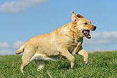 DOG 18 JE0036 01