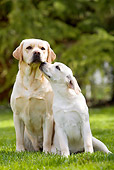 DOG 18 JE0037 01