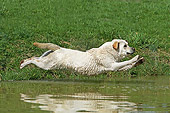 DOG 18 JE0038 01