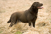 DOG 18 JE0039 01