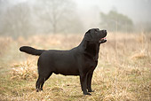 DOG 18 JE0040 01