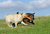 DOG 18 JE0048 01