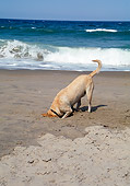 DOG 18 JN0001 01