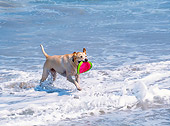 DOG 18 JN0002 01
