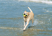 DOG 18 JN0003 01