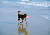 DOG 18 JN0007 01