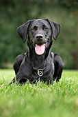 DOG 18 JS0001 01