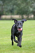 DOG 18 JS0004 01