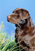 DOG 18 KH0010 01
