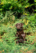 DOG 18 KH0011 01