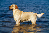 DOG 18 KH0012 01