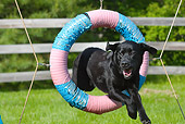 DOG 18 LS0032 01