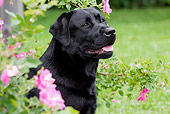 DOG 18 LS0033 01